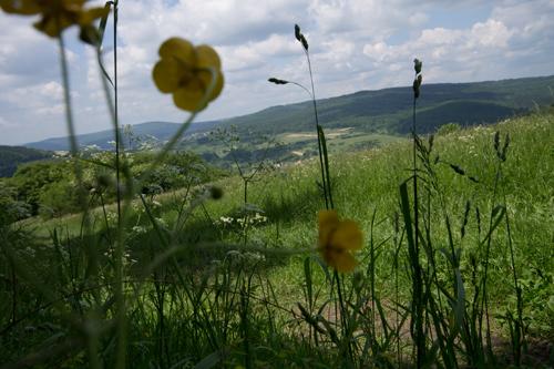 Hochwiesen am Atzeberg.