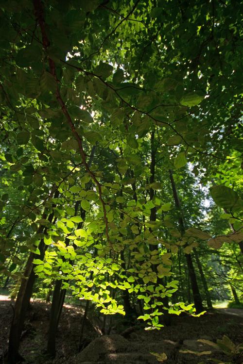 Lichtspiele im Sommerwald