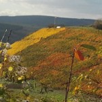 Steile Weinberg an der Glan.