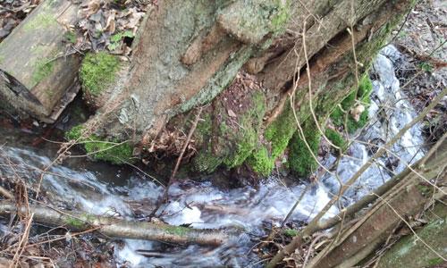 Der Wickersheller Bach sucht sich seine Weg. Wenn es sein muss, um den Baum herum.