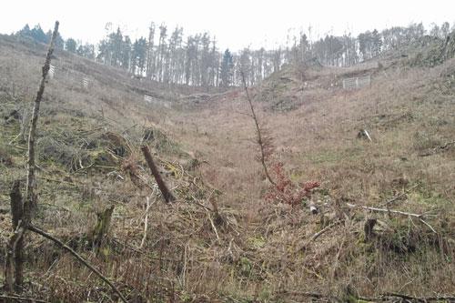 Die Gatter um die Baumschonungen sehen auf dem Foto aus, wie Lawinenzäune.
