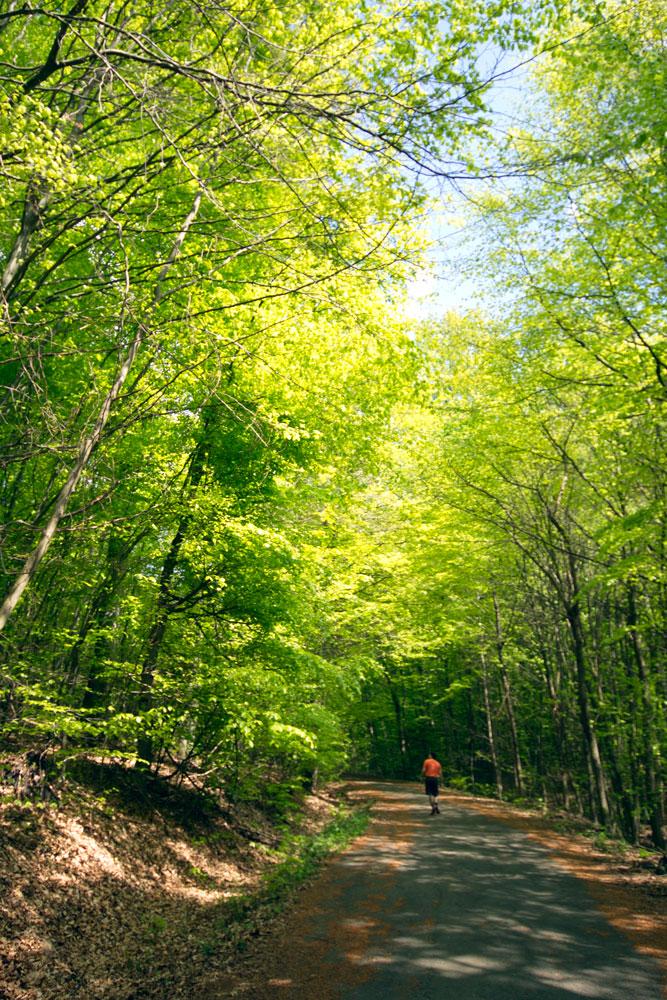 Waldwanderer