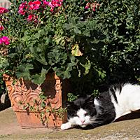 Katze badet in der Sonne.