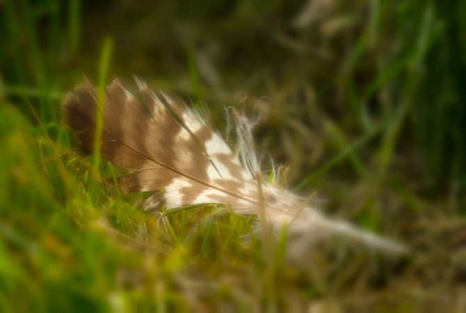 Hätte ich in Bio mal besser aufgepasst. Kennt jemand den Vogel, dem diese Feder gehört?