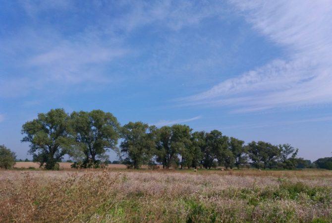 Alte Weiden in den Naturschutzgebieten an der Selz.