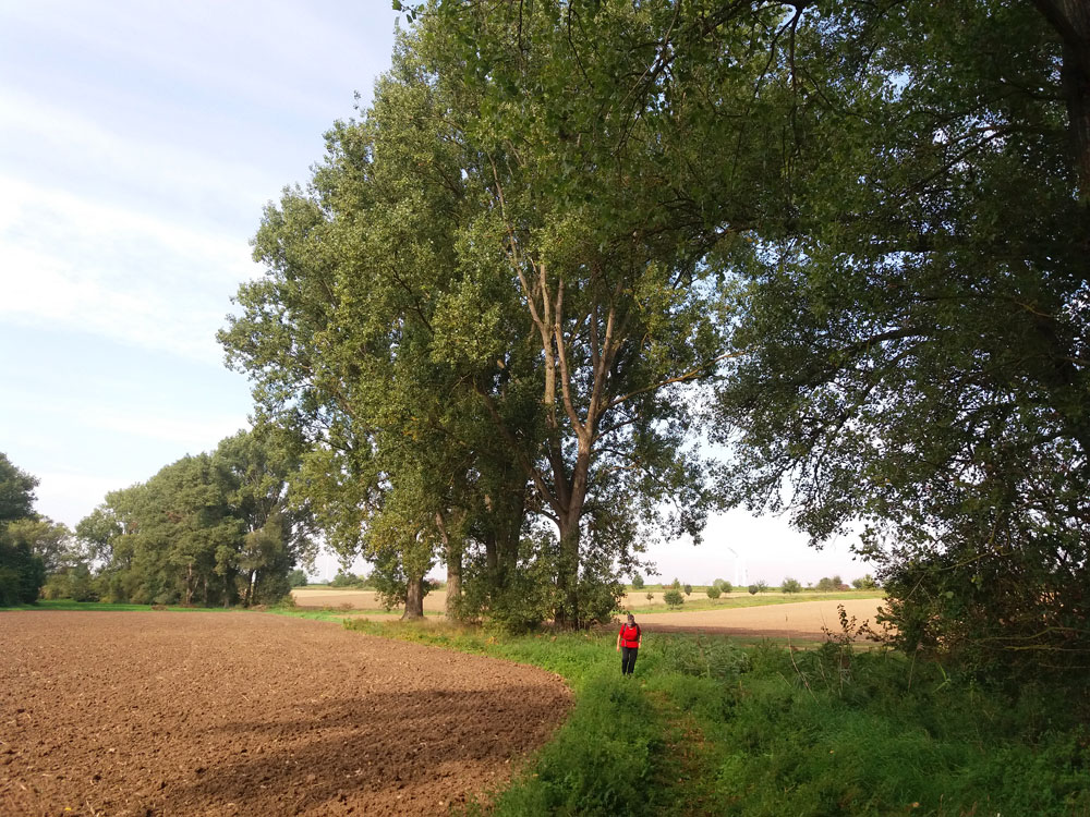 Wandern im naturgeschützten Rheinhessen.