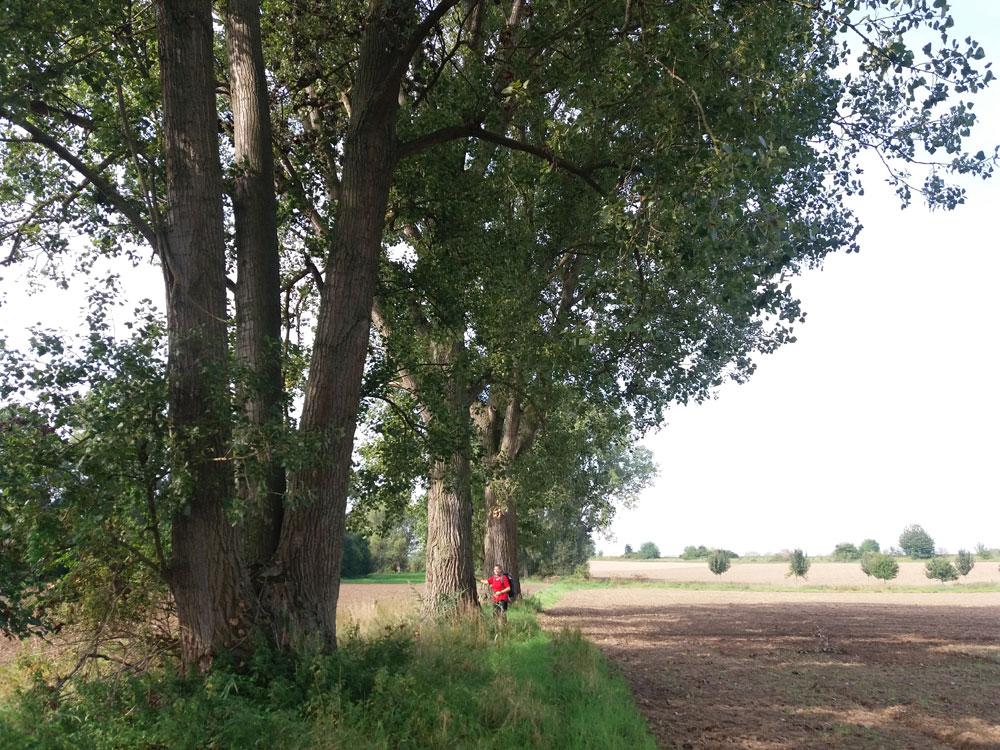 Unter hohen alten Bäumen.