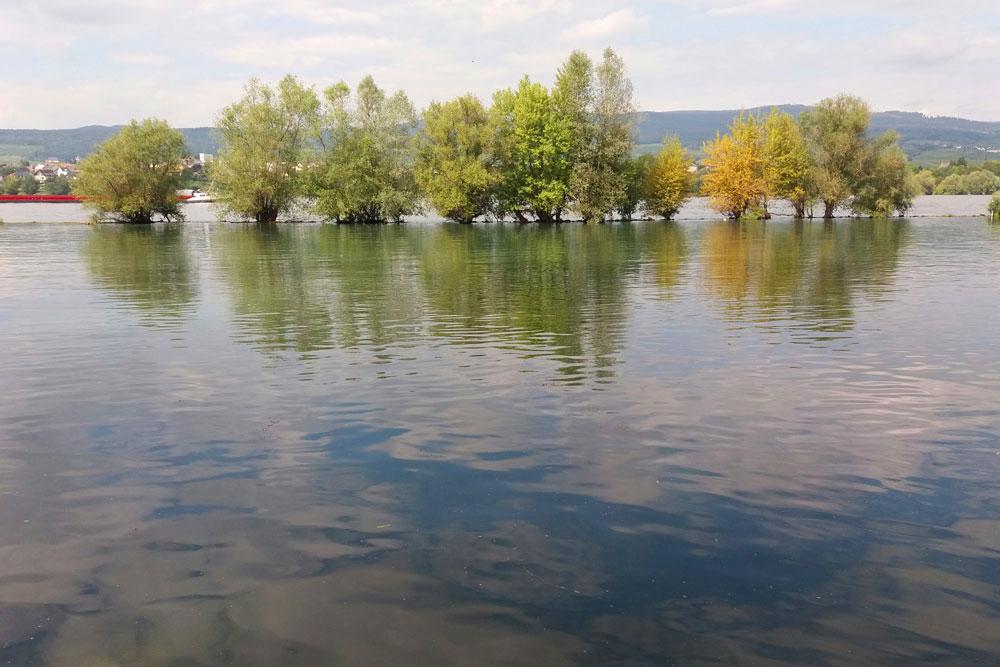 Mündung der Selz in den Rhein.