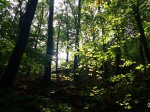 Stressfrei bergauf + bergab (Trittsicherheit) @ Binger Wald [ausgebucht / Warteliste]
