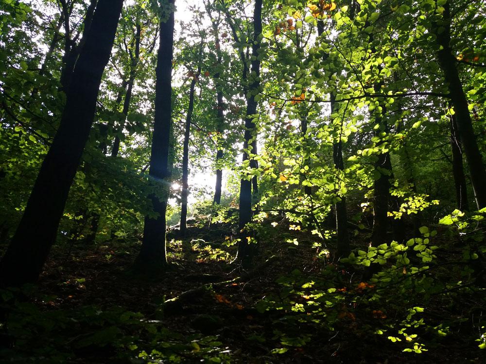 Sonne blitzt durchs Blätterdach.