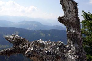Stressfrei bergauf + bergab (Trittsicherheit) @ Binger Wald [Warteliste]