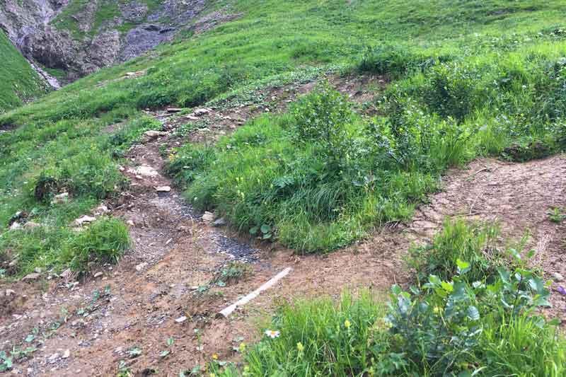 Bodenerosion auf einer Bergwiese