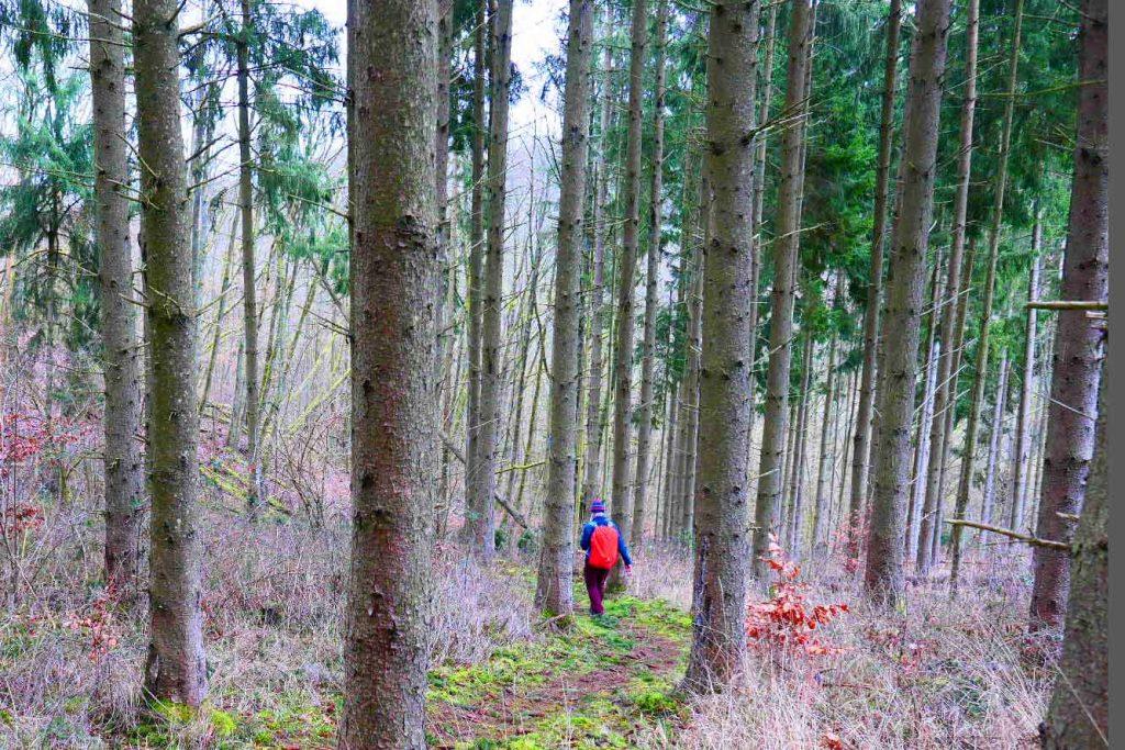 Hildegard von Bingen Weg Waldpfad