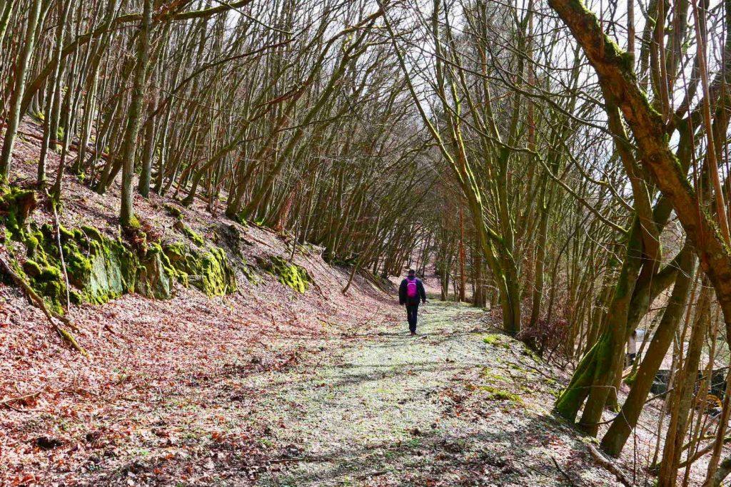 Wispertrail Ranseler Höhenrausch im Ranselbachtal
