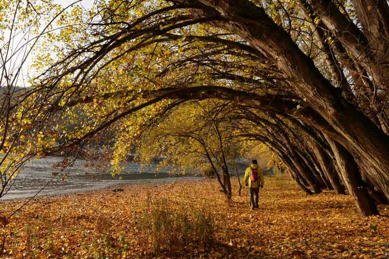 Herbstlicher Rheinstrand bei Kestert.