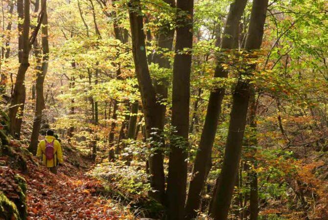 Pulsbachklamm im Herbst